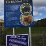 הפרה עם הפוני קראנו לפרה של איזור ההיילנדס